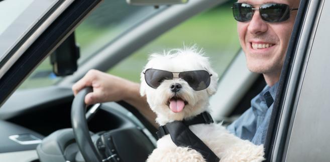 pies, samochód, podróż, wakacje