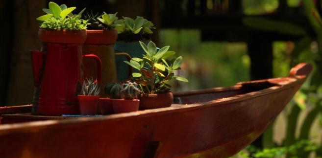 ogród, rośliny