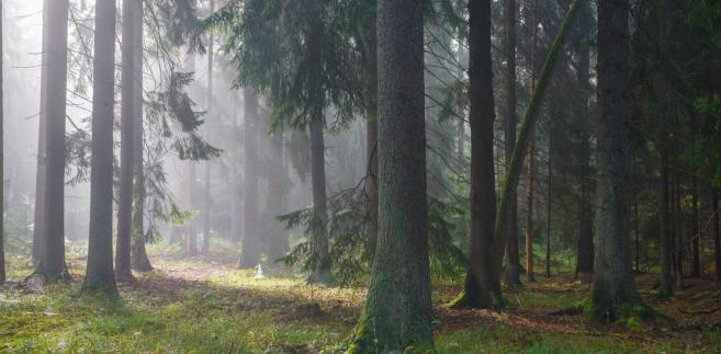 """""""Żeby ten Białowieski Park Narodowy był przyjemnym miejscem dla wszystkich (...), a zwłaszcza dla tych, którzy cenią sobie naturalną przyrodę"""" - dodał nowy dyrektor BPN"""