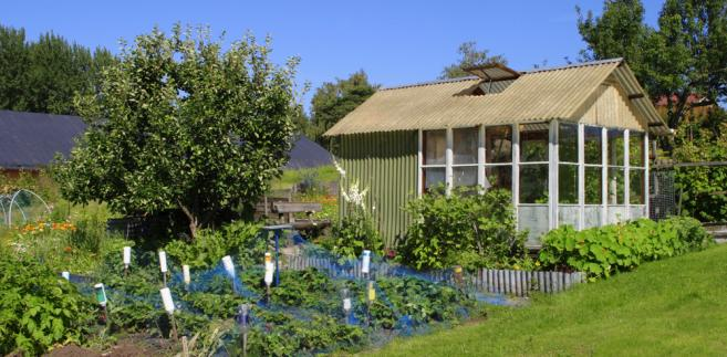Artykuł 12 ustawy o rodzinnych ogrodach działkowych wprost mówi, że na działkach nie można mieszkać. Zarząd ogrodu ma obowiązek powiadomić o tym fakcie powiatowy nadzór budowlany, który rozpocznie odpowiednią procedurę administracyjną.