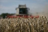 Polscy rolnicy przerażeni. Zaleje nas fala ukraińskiej <strong>pszenicy</strong>?