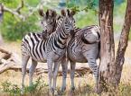4. Park Narodowy Krugera w Republice Południowej Afryki