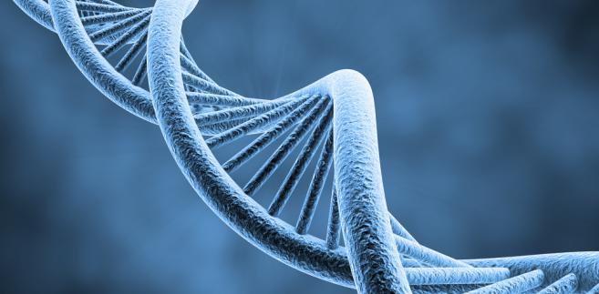 """Chiński zespół badaczy """"zmiksował"""" wirusy ptasiej grypy H5N1 i H1N1, uzyskując nowy szczep. Formalnie rzecz biorąc, chodziło o próbę odtworzenia procesu tworzenia się nowych wirusów grypy w naturze. Ale wynik był dosyć przerażający – naukowcy opracowali aż 127 rozmaitych hybryd, z których pięć było w stanie przenosić się drogą kropelkową"""