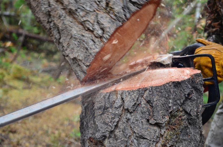 drzewo, ścinanie drzewa, wycinka drzew