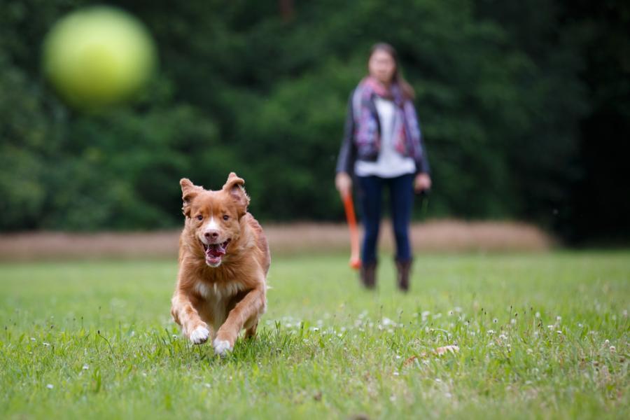 pies, smycz, park