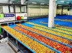 Grupa Producentów Owoców Galster: Nie zamierzamy spocząć na laurach