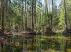 """""""Minister środowiska dba tylko interes Lasów Państwowych"""". Organizacje chcą interwencji Morawieckiego ws. Puszczy Białowieskiej"""