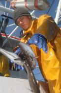 Rząd zajmie się ustawą o rybołówstwie morskim