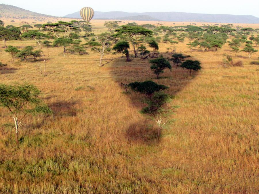 Tanzania w Kenii